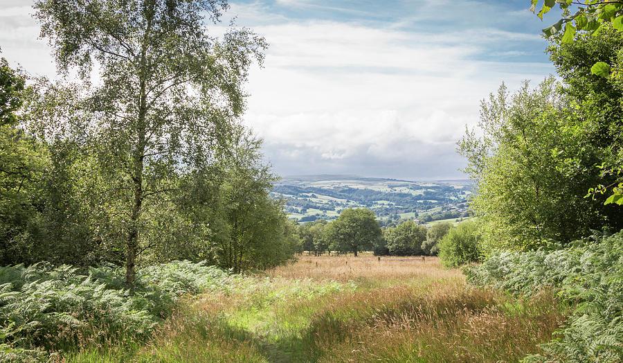 Yorkshire Photograph - Green Corridor by Raelene Goddard