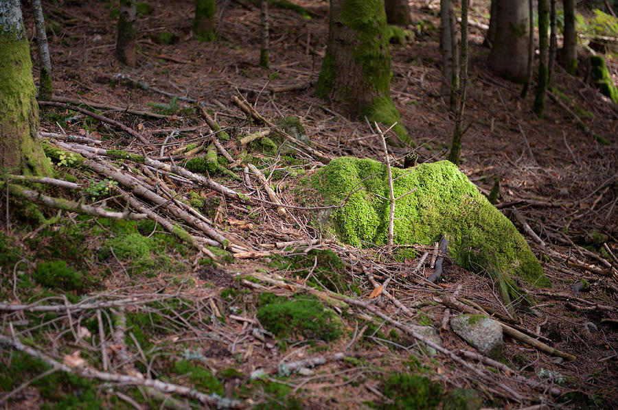 Rock Photograph - Green covered rock by Wim Slootweg