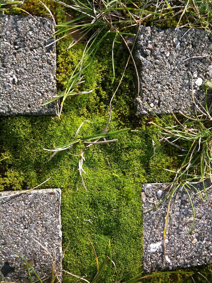 Cross Photograph - Green Cross  by Sara Efazat