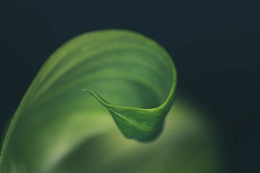 Close Up Photograph - Green Curve by G Ben