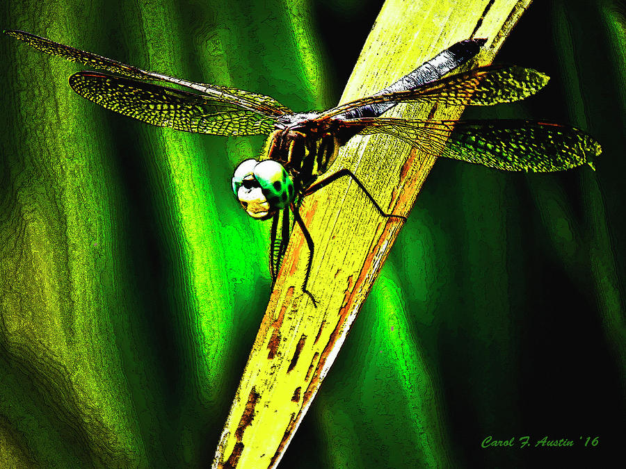 Green Darner Dragonfly Frontal Portrait Wall Art Mixed Media by ...