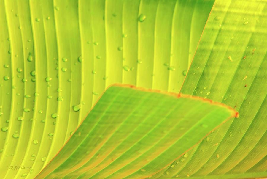 Green Dew Photograph