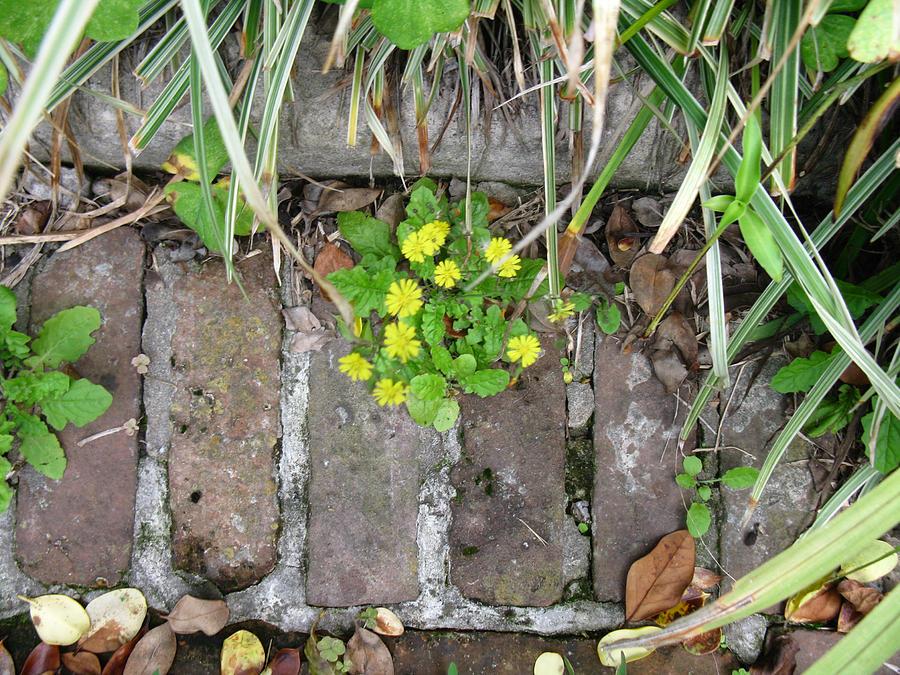 Flowers Photograph - Green Door 16 by Tom Hefko