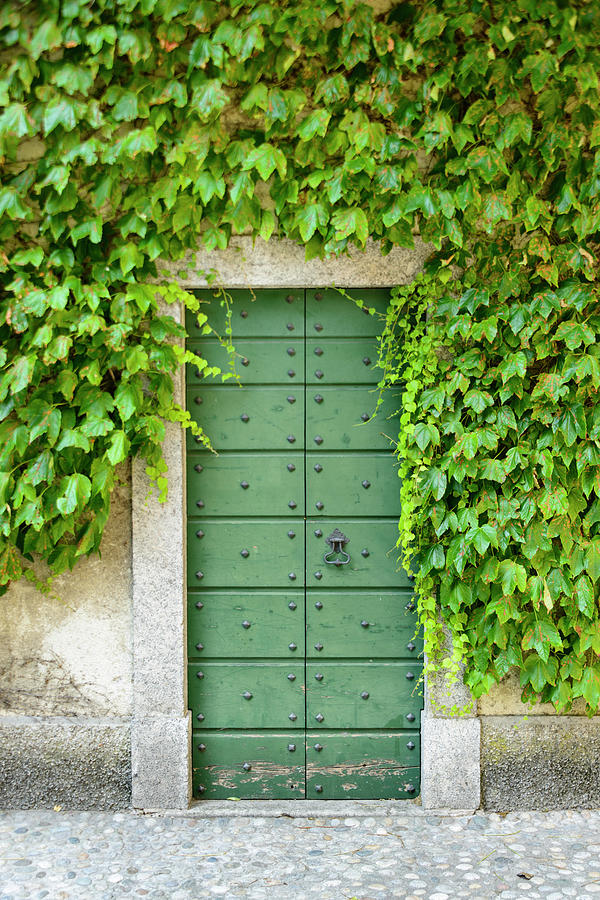 Green door and Ivy by Oscar Gutierrez
