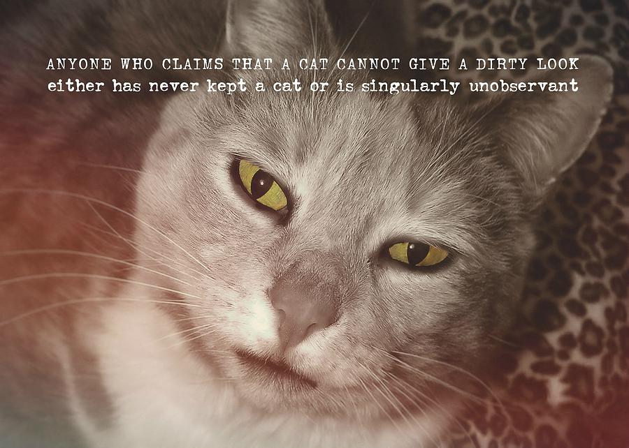 Cat Photograph - Green Eyed Glare Quote by JAMART Photography