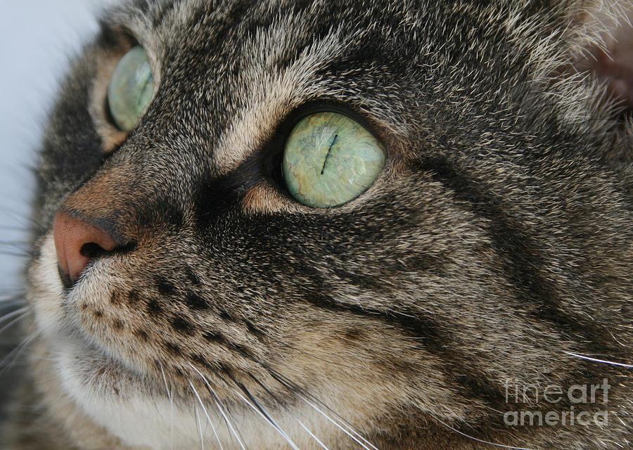 Cat Photograph - Green Eyes by Debra Straub