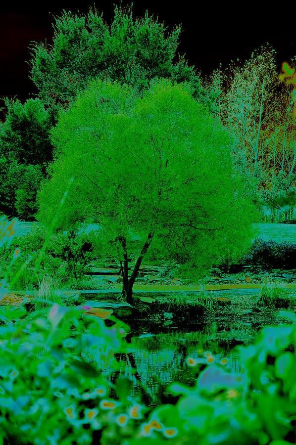 Digital Photograph - Green Fantasy by Etha  Walters