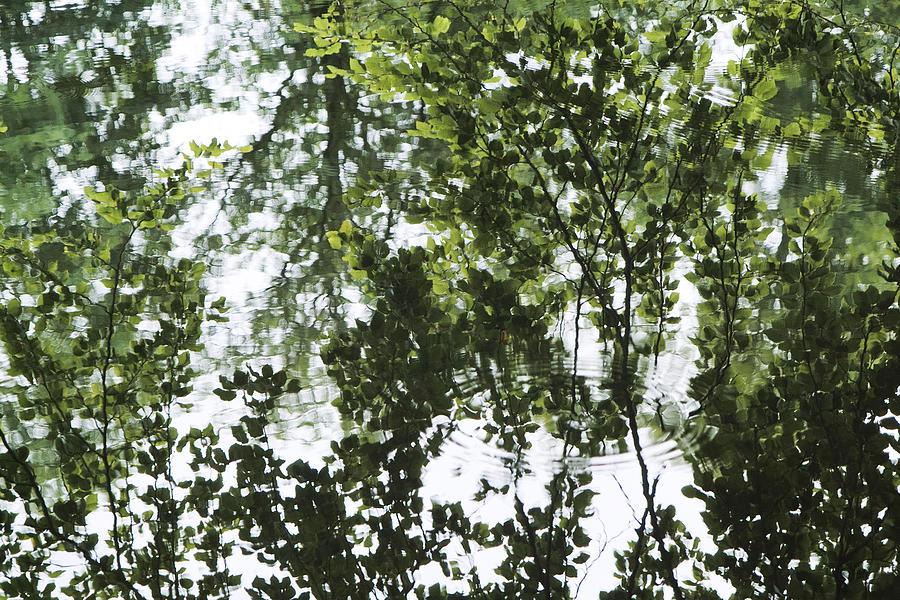 Denmark Photograph - Green Fantasy by Wedigo Ferchland
