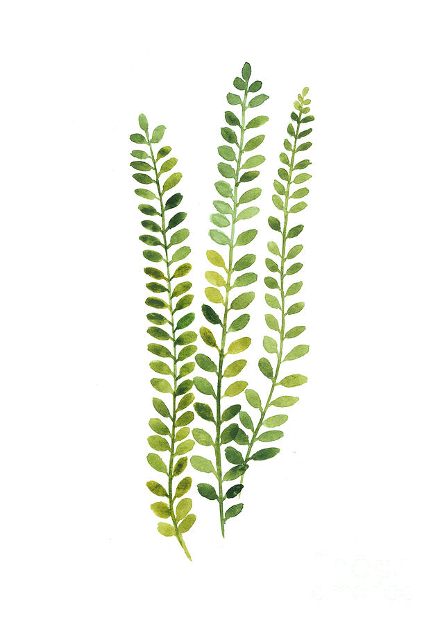 Green Fern Watercolor Minimalist Painting Painting By