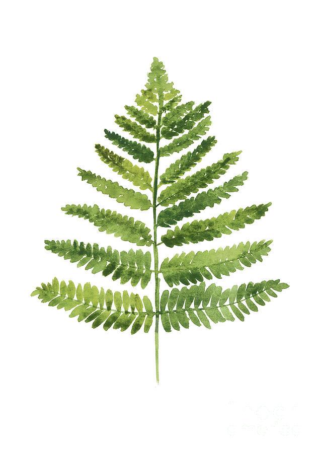 Ferns Painting - Green ferns watercolor poster by Joanna Szmerdt