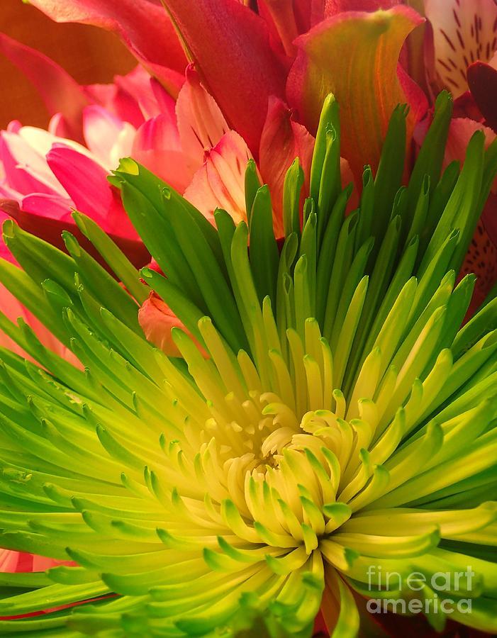 Green Focus by Christina Verdgeline