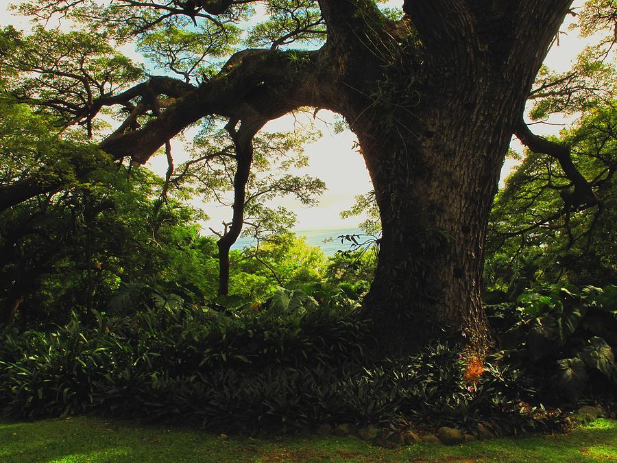 Tropical Photograph - Green Giant by Ian  MacDonald