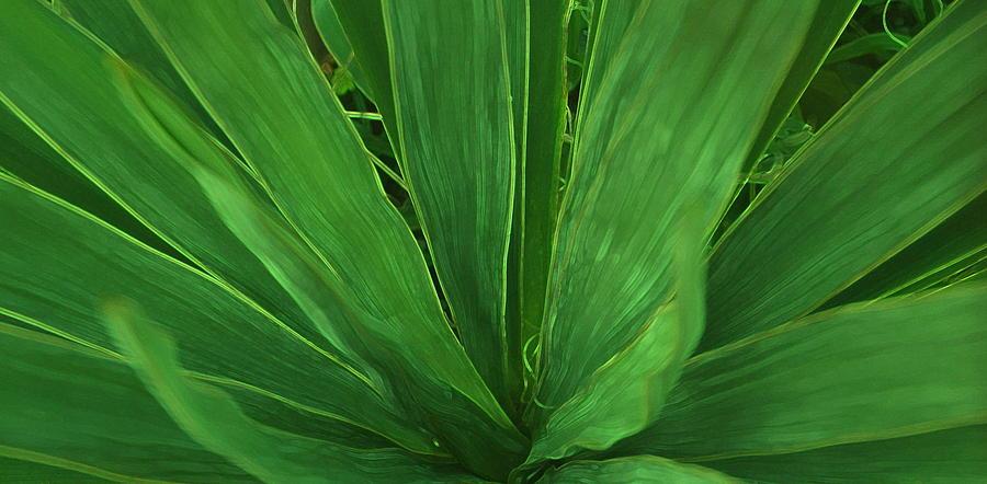 Green Plant Photograph - Green Glow by Linda Sannuti