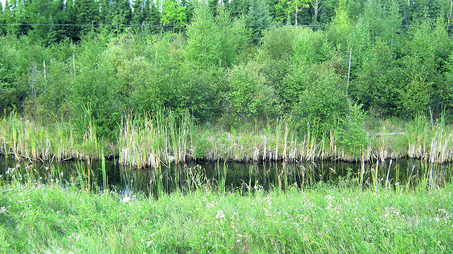 Green Photograph - Green Grass Black Water by Emma Frost
