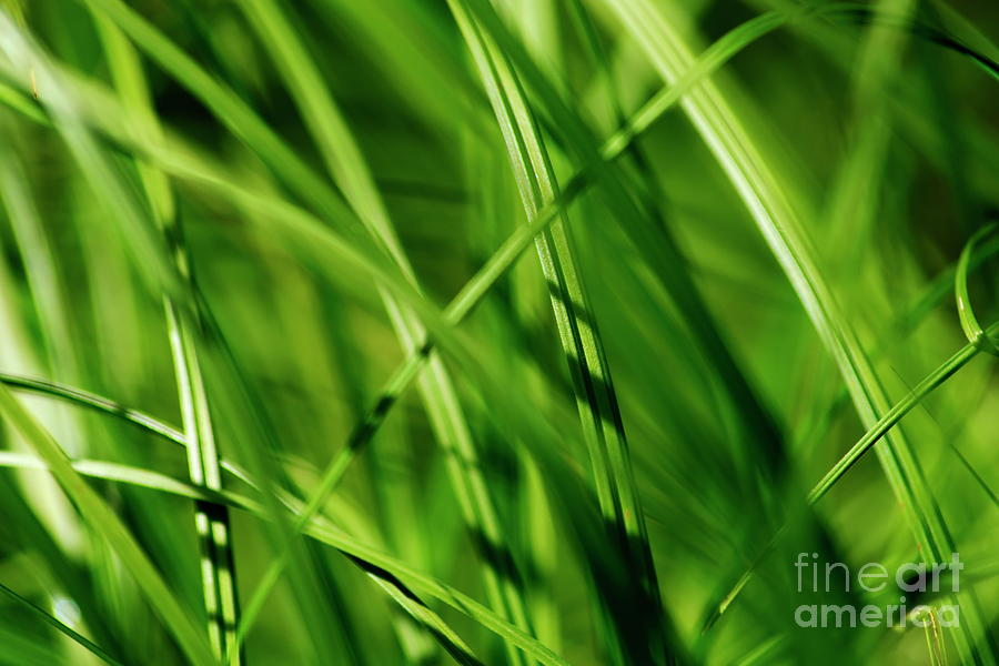 Grass Photograph - Green Grass by Esko Lindell