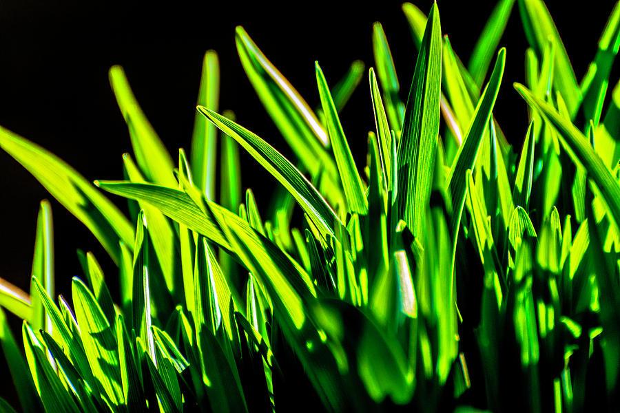 Grass Photograph - Green Grass by Lonnie Paulson