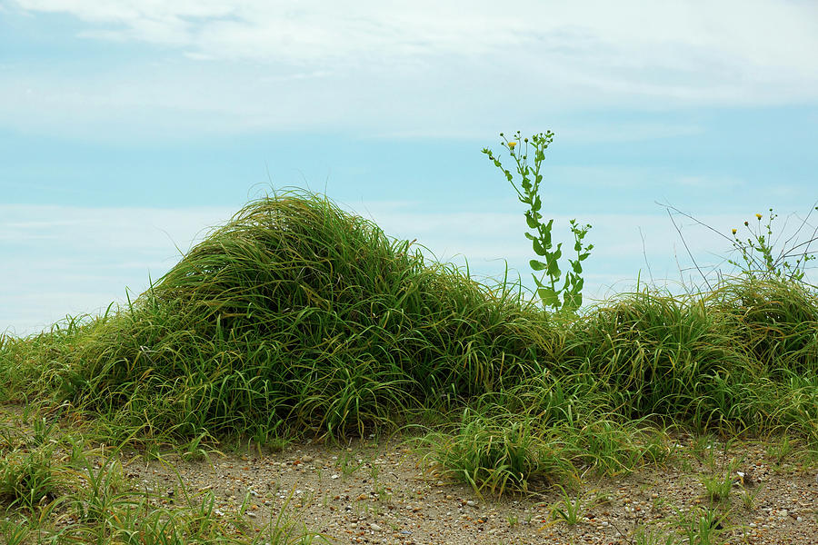 Sea Photograph - Green Grass Mountain by Cate Franklyn