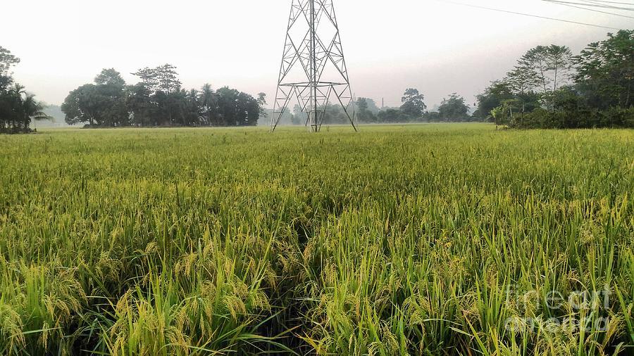 Green Grass Pyrography - Green Grass by Saikat Das