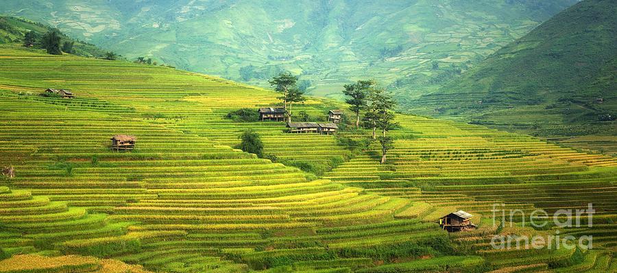 Rural Photograph - Green Land by Thomas Jones