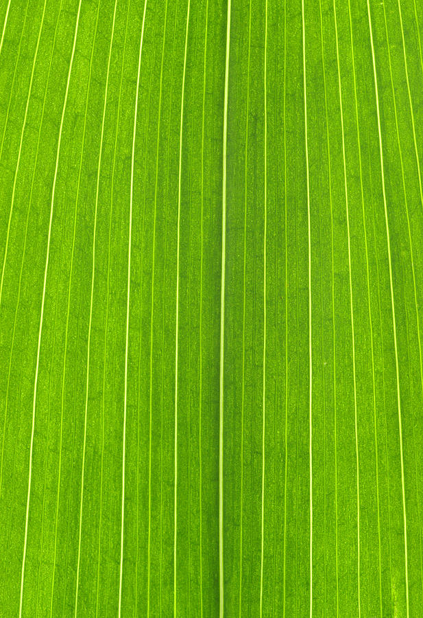 Green Photograph - Green Leaf by Frank Tschakert
