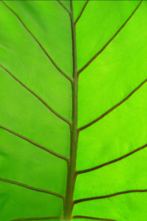 Green Leaf Photograph - Green Leaf by Marcus Adkins