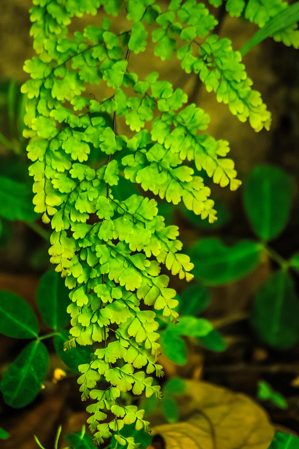Flor Photograph - Green Leaf by Totto Ponce