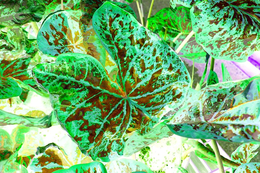 Leaf Photograph - Green Leafmania 1 by Marianne Dow