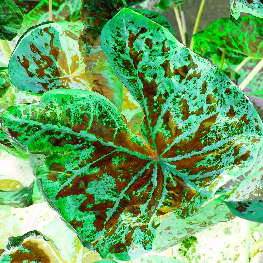 Leaf Photograph - Green Leafmania 2 by Marianne Dow