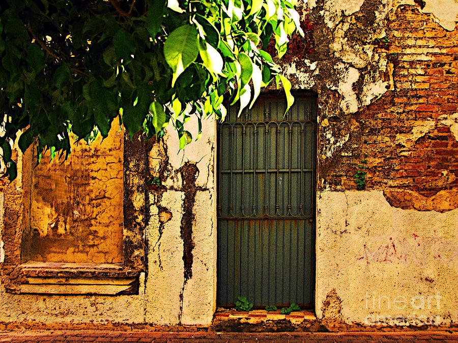 Michael Fitzpatrick Photograph - Green Leaves And Wall By Michael Fitzpatrick by Mexicolors Art Photography
