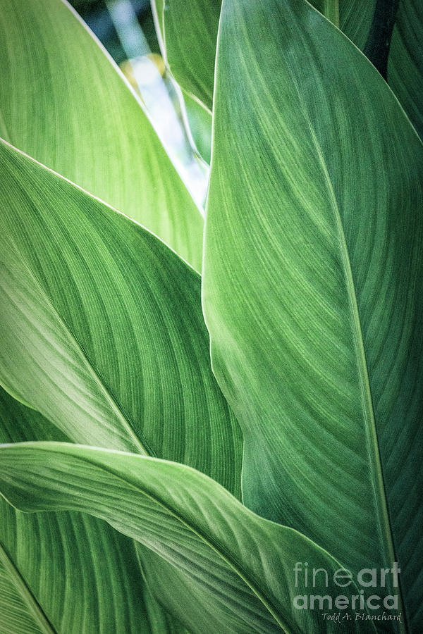 Green Leaves No. 2 by Todd Blanchard