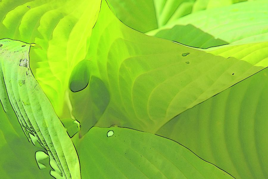 Nature Photograph - Green Leaves Sketch 2 by Jerry Sodorff