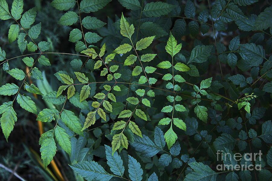 Nature Photograph - Green Leaves by Viktor Savchenko
