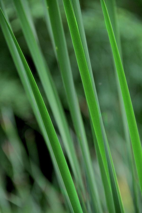 Green Photograph - Green Lines by Odd Jeppesen