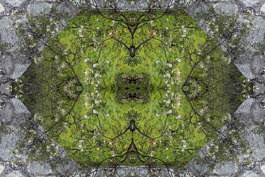 Green Photograph - Green Mandala by Viktor Savchenko