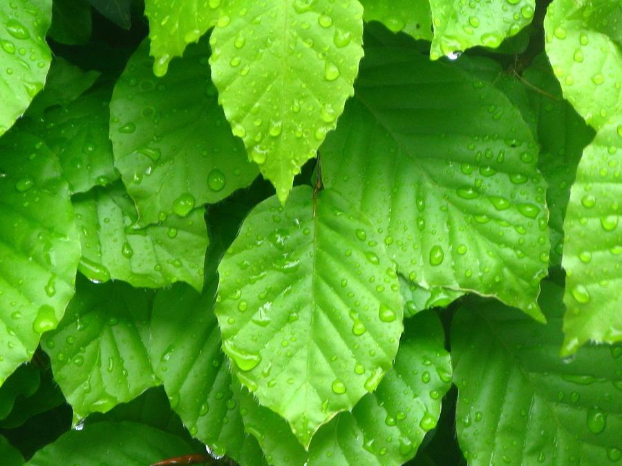Green Photograph - Green by Maria Joy