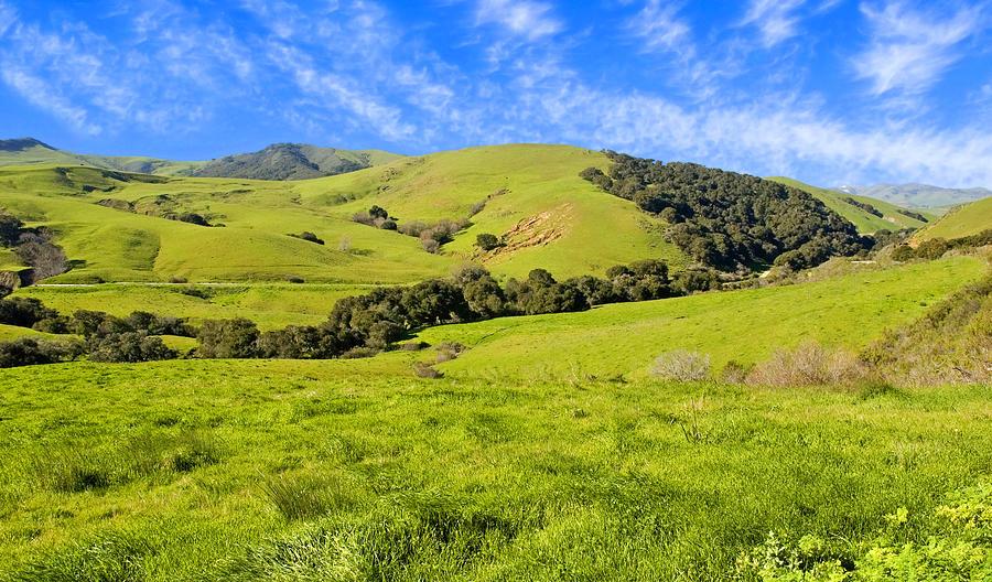 Green Photograph - Green Meadow Santa Ynez Valley Ca by Eyal Nahmias