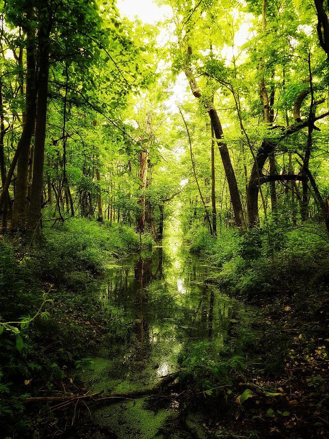 Green Morning Photograph