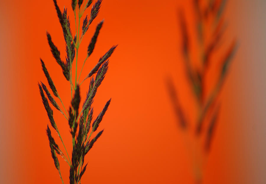 Orange Photograph - Green On A Background by Vadim Grabbe