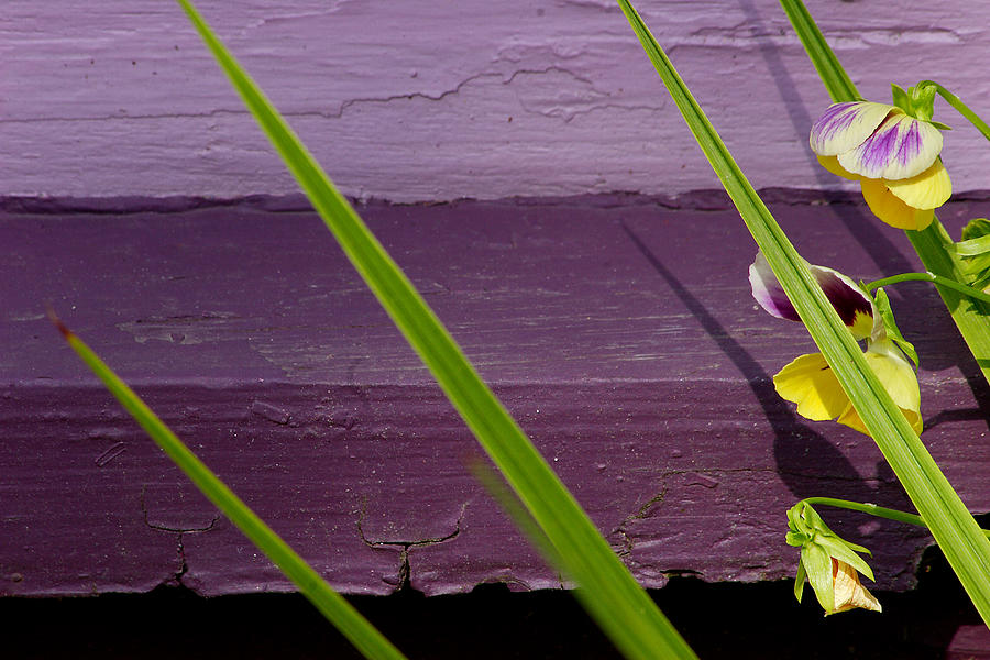 Abstract Photograph - Green On Purple 6 by Art Ferrier