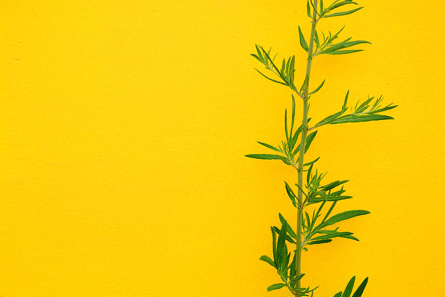 Color Photograph - Green On Yellow 5 by Art Ferrier