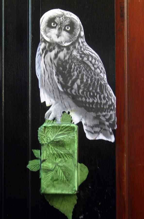 Photographer Photograph - Green Owl by Jez C Self