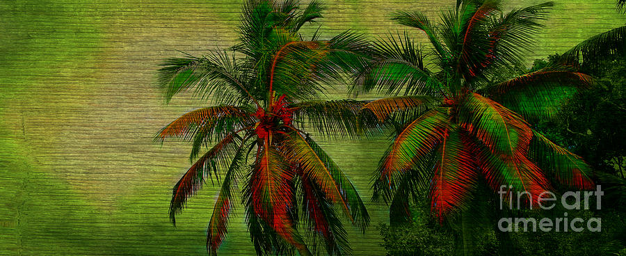 Palm Photograph - Green Palms by Perry Webster