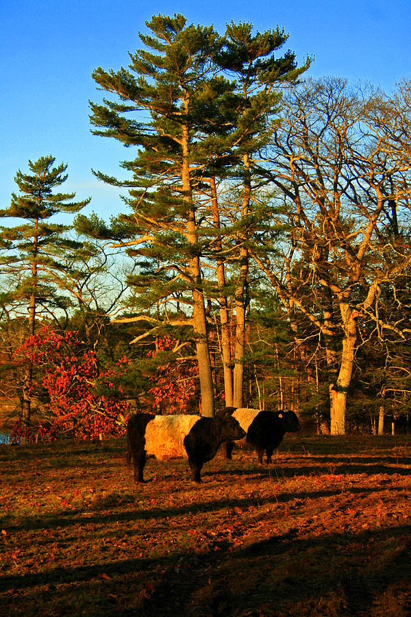 Fall Photograph - Green Pastures by Doug Mills