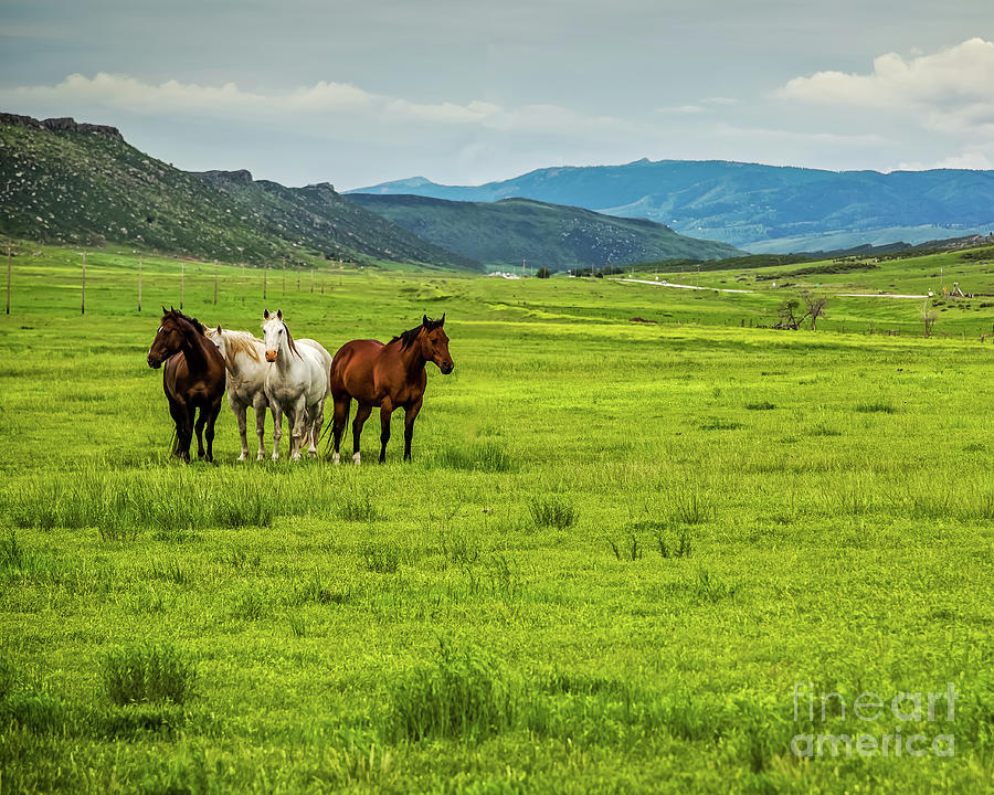 Green Pastures Photograph - Green Pastures by Jon Burch Photography