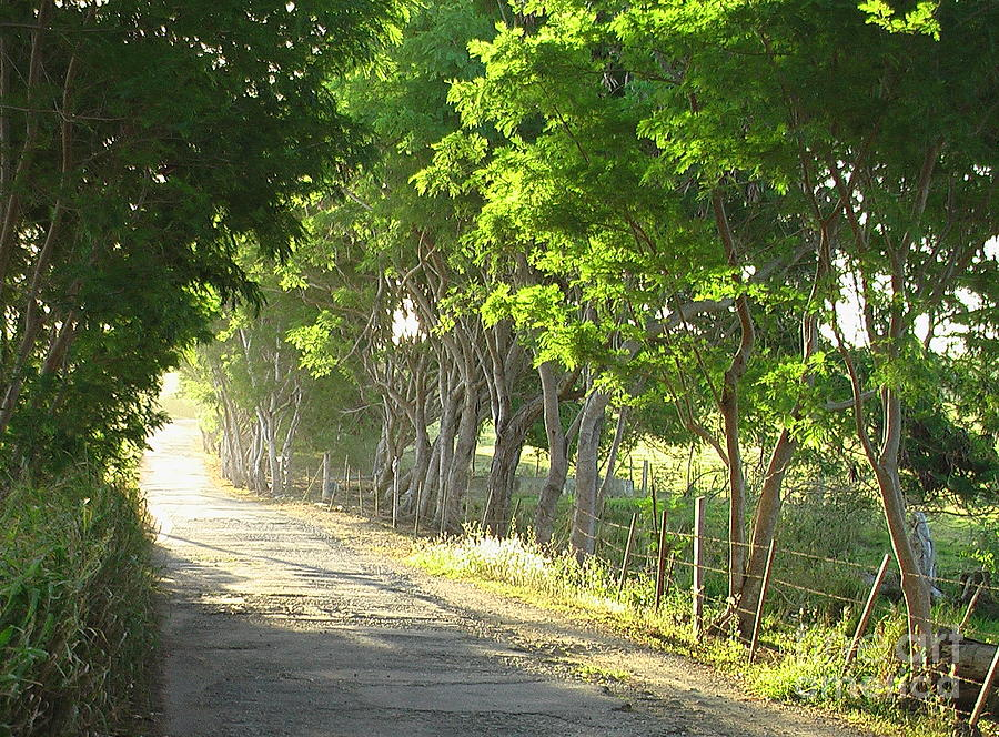 Early Morning Photograph - Green Path by Barbara Marcus