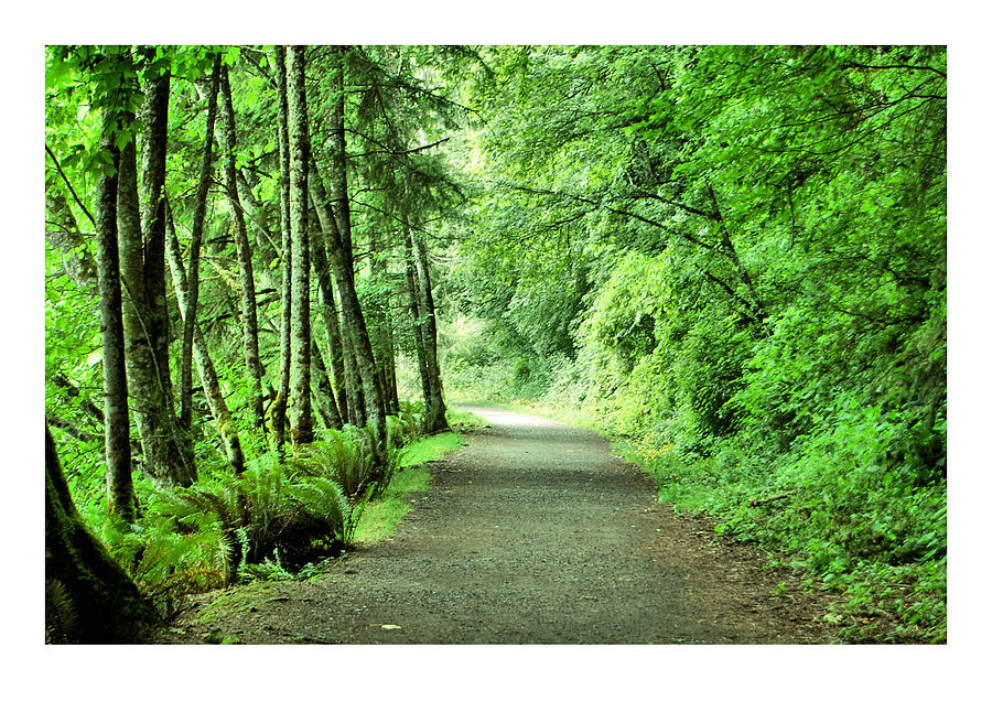 Green Photograph - Green Path by J D Banks