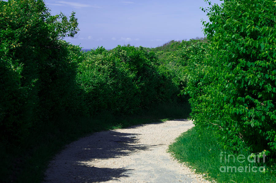 Green Pathway Photograph