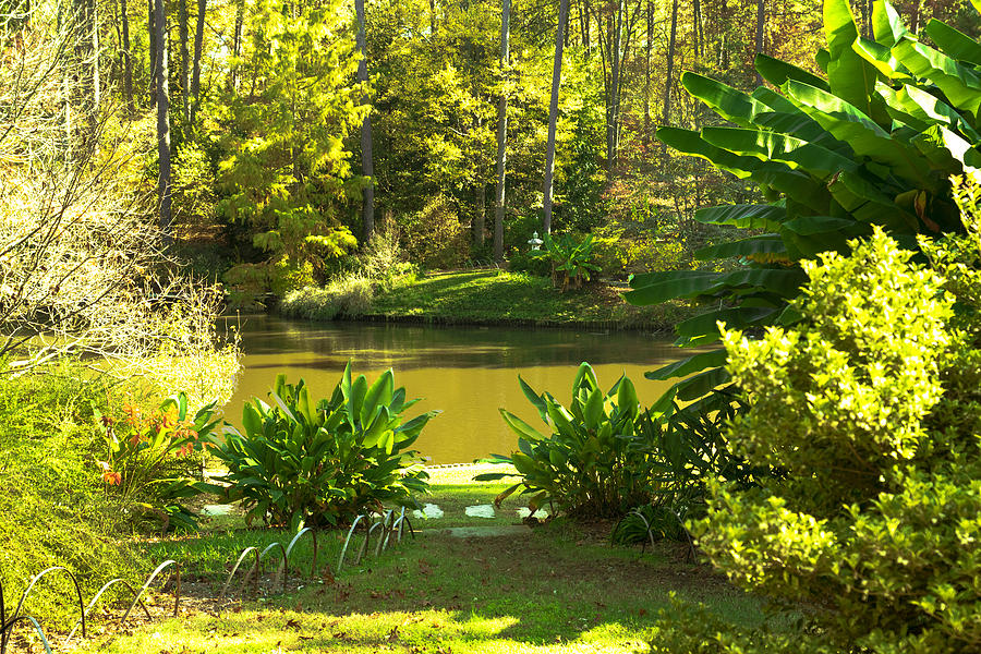 Landscape Photograph - Green Pond by William Hall