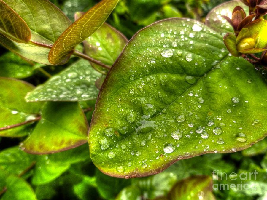 Green Raindrops Photograph