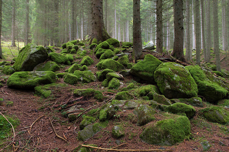 Green Photograph - Green Rock Forest by Wim Slootweg